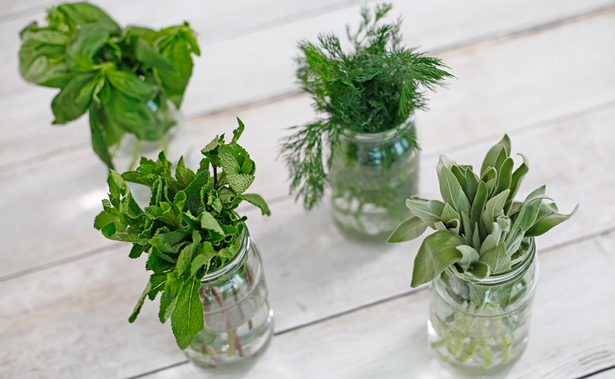 كيفية الحفاظ على الأعشاب الطازجة في  - وصفة 2019